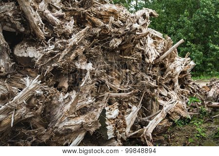 Dried Tree Stumps From Close