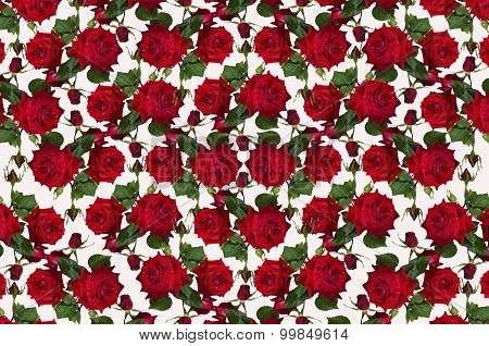 Motley white background with red roses and buds