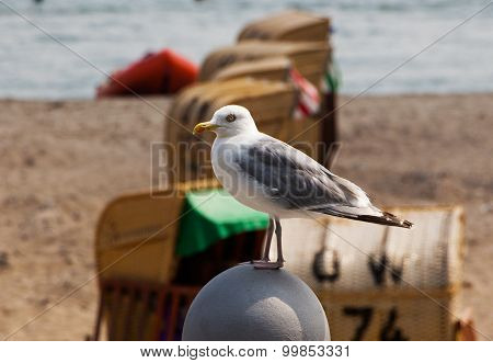 Seagull Sitting On The Parapet In Front Of  Beach