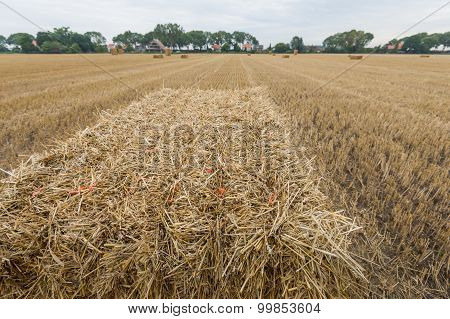 Pack Straw Tied With Orange Rope At Close
