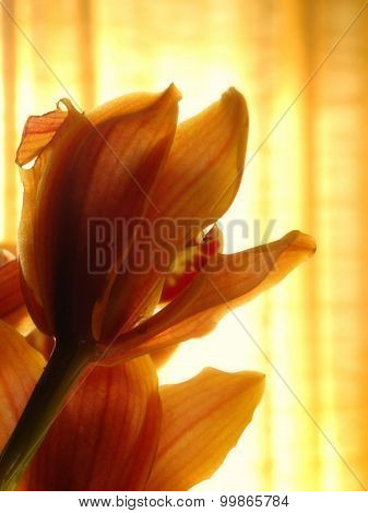 Orchid flower in afternoon light