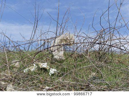 plastic trapped in bramble bush