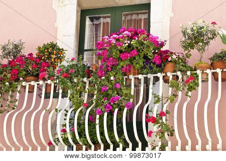 White metal balcony with floral display of colourful hanging plants small olive orange trees