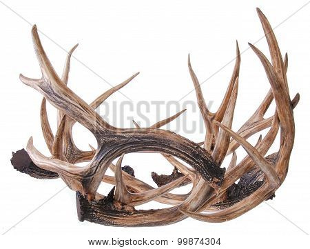 elk horns isolated on a white