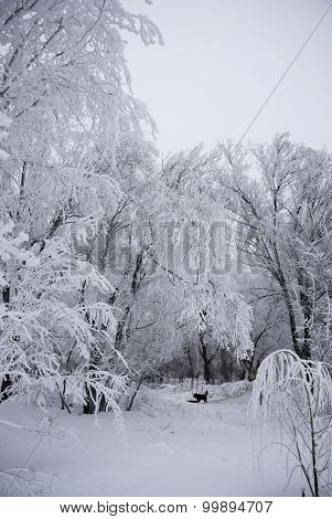 Winter Cloudy Scene. White Covered Path With Trees Covered In Snow. Dog Running In The Distance.