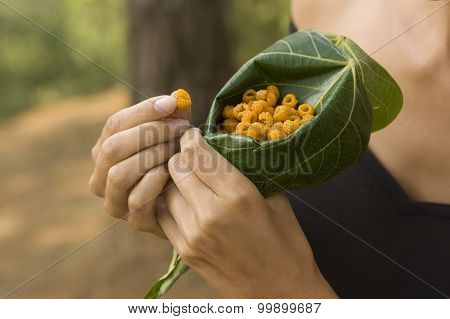 Woman Holding And Eating Wild Raspberry In The Forest