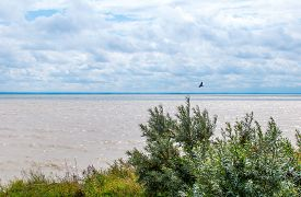 pic of novosibirsk  - View from the shore of the man - JPG