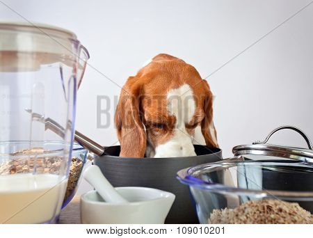 Beagle Behind A Kitchen Table
