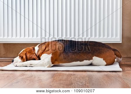 Dog Resting Near A Warm Radiator