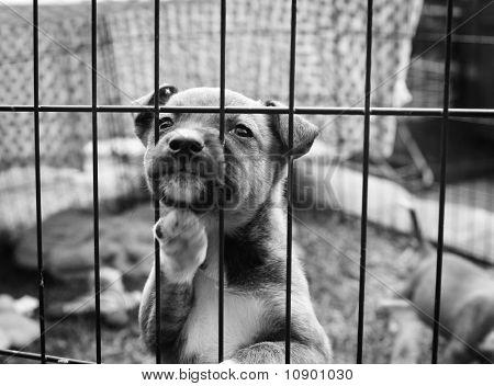 Puppy in a pen