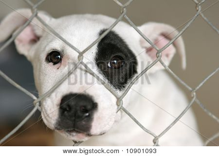 Puppy in a pen