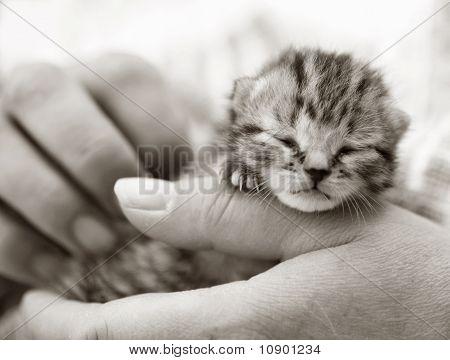 Newborn kitten in the hand