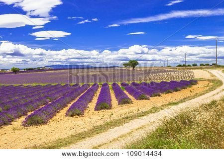 beautiful Provence with blooming lavander. France