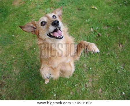 Cute scruffy dog standing