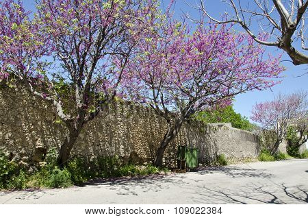 Street With  Stone Wall And Blossoming Trees In Rhodes Island