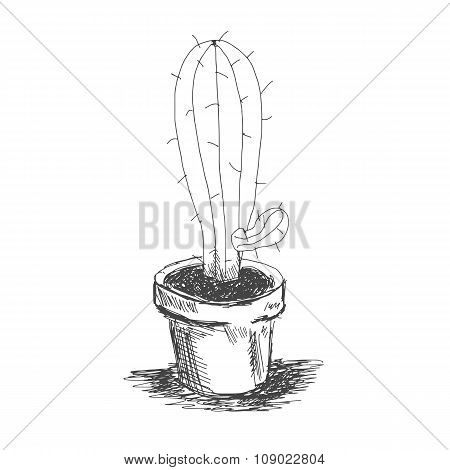 Vector Sketch Illustration Eps 10 Cactus In A Pot
