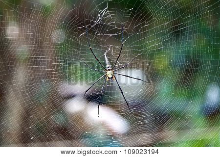 Big Spider Sitting In The Net