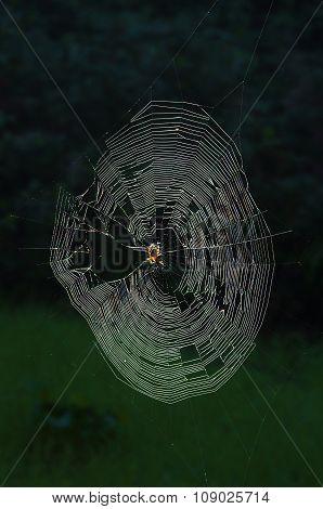 Garden-spider Orb Web Lit By The Sun