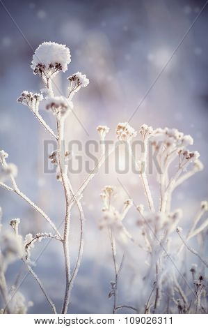 The Dry Plants In Snow In The Winter