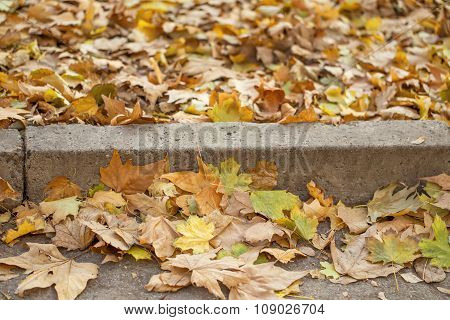 Autumn maple leaves on grey concrete curb and asphalt road