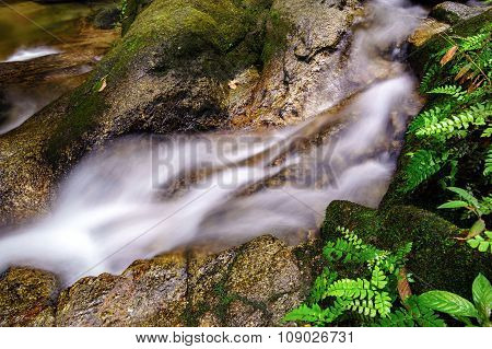 Beautiful River Stream In Tropical Forest