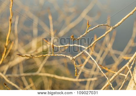 Leafless tree branch