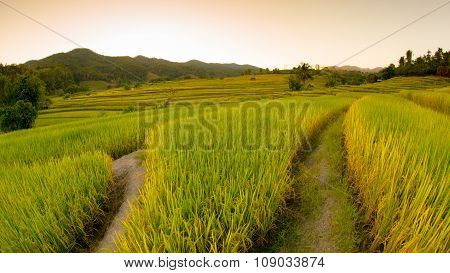 Rice fields on terraced in north Thailand, Mae jam, Chiang Mai, Thailand.