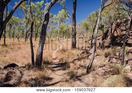 Outback, Undara Volcanic National Park, Australia