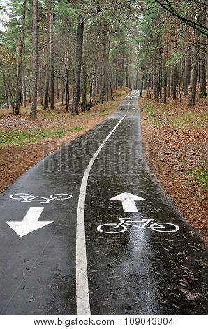 Wet asphalt bike path