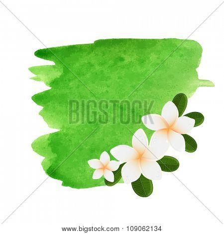 Vector white frangipani flowers. Plumeria flower on green watercolor background