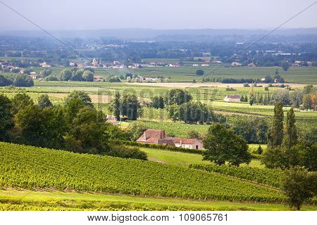 Vineyard Fields In The Southern France