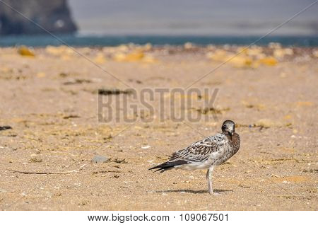 Lonely Bird In The Paracas National Reserve, Peru