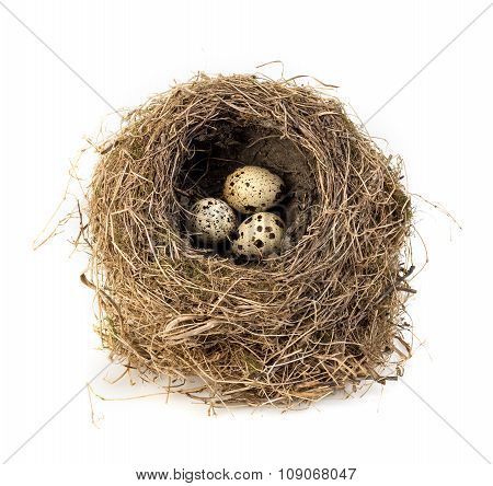 Original Bird's Nest With Quail Eggs Close-up Isolated On A White Background.