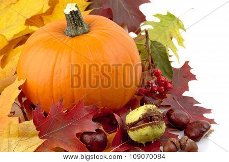Left Side Shot Of Pumpkin With Autumn Leaves For Thanksgiving Day On White