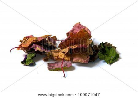 Colorful Patchouli Leaves Dried
