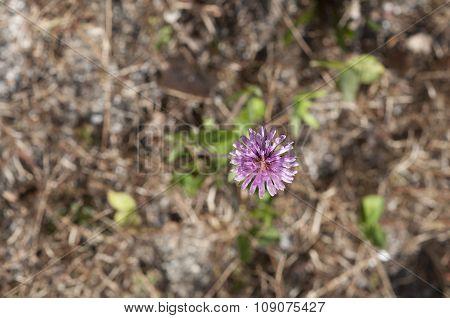 Purple Flower Against Autumn Brown