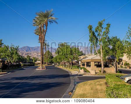 Palm trees on a road
