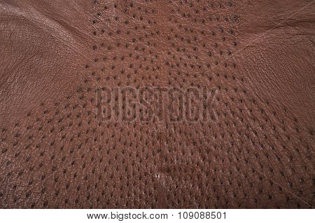 Brown ostrich leather