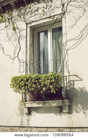 Italian Window With Plants