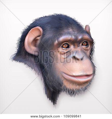 Chimpanzee head, realistic vector illustration