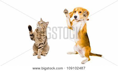 Playful cat and dog