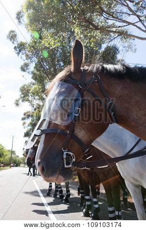 Reclaim Australia Rally - Melton