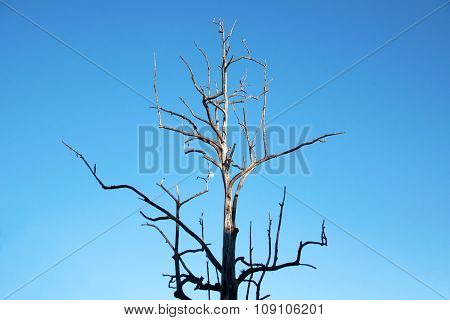 Branches of dry wood boiler and blue sky
