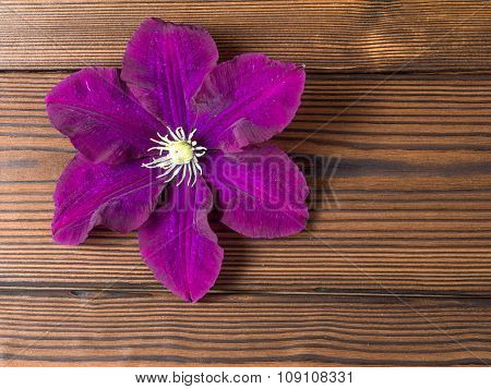 Purple Clematis On The Wooden Planks