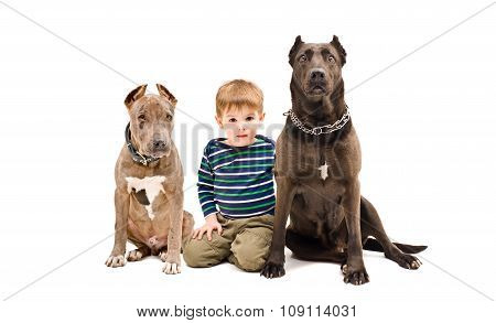 Cute boy and two pit bulls sitting together
