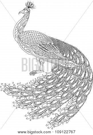 Hand drawn Peacock for anti stress Coloring Page with high details, isolated on white background