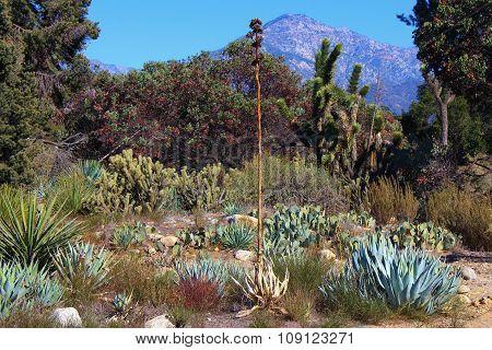 High Desert Landscape
