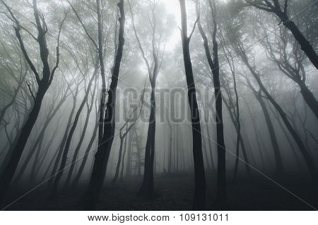 Forest canopy in autumn season with fog