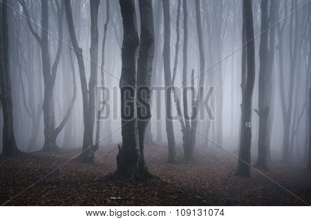 Mysterious trees in Halloween forest