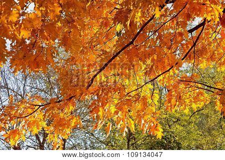 branch autumn trees